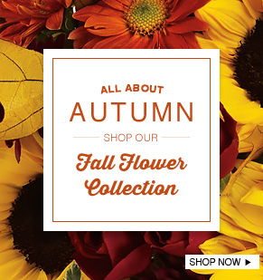 Fall Flower Collection